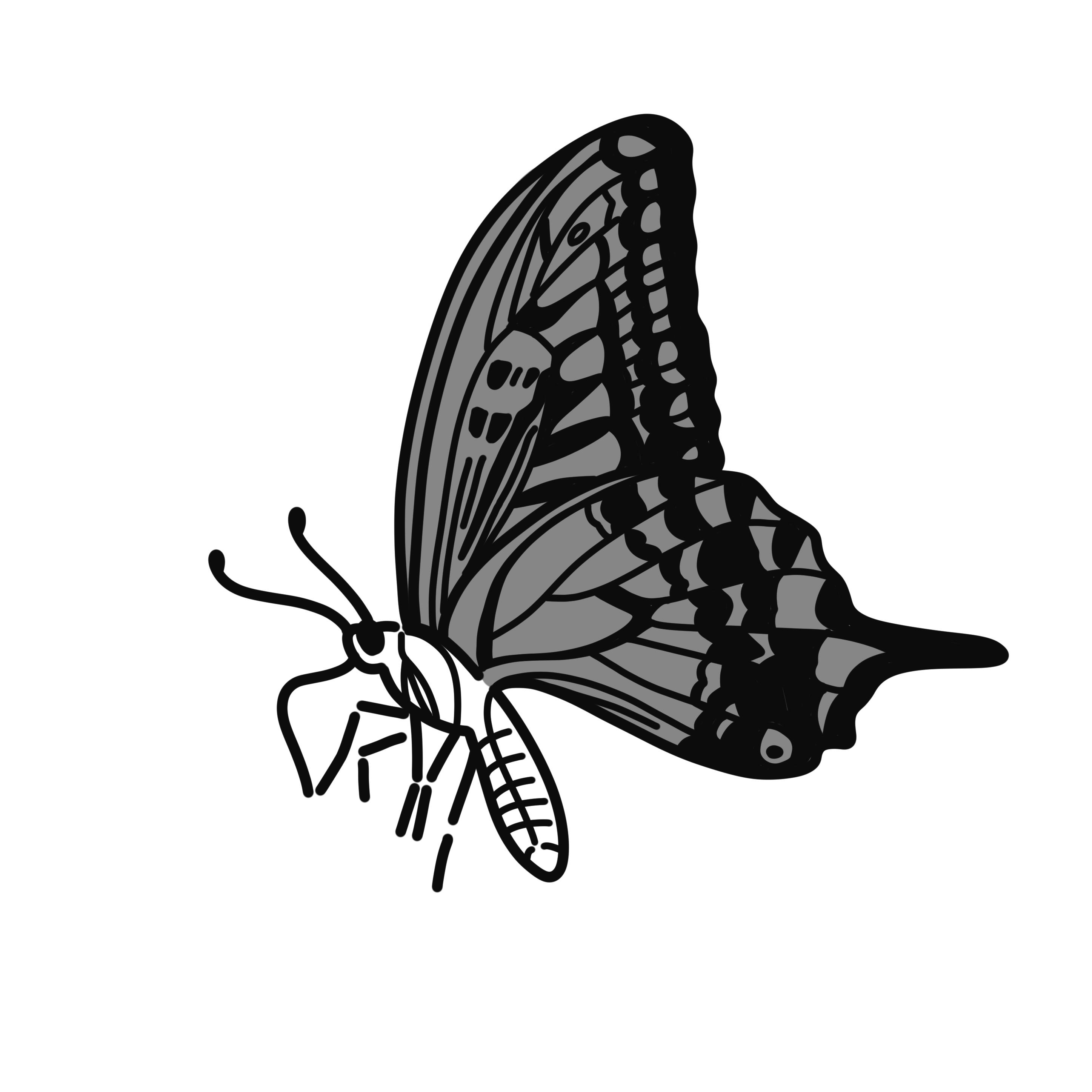 英語イラスト蝶々